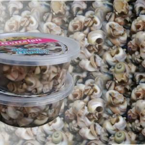 updated-pix-sea-snail